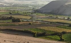Arica y Parinacota el choclo