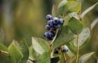 Berries11.jpg