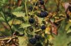 Berries13.jpg
