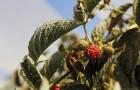 Berries15.jpg