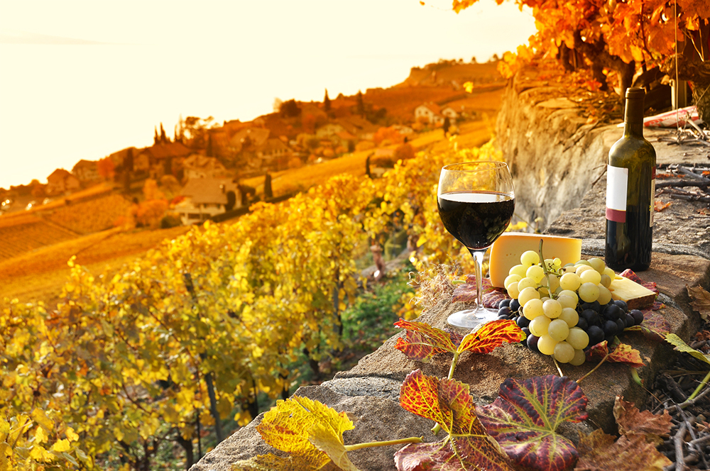 BOUTIQUE WINE TOURS