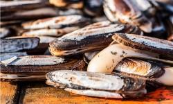 Pescadores, cocineros y científicos buscan un camino común para aprovechar la despensa del mar