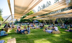 Vendimia Feria Viñedos Veramonte