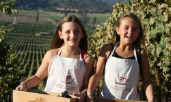 Harvest Experience by Casas del Bosque
