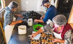 Soluciones innovadoras mejoran la competitividad y comercialización de pescadoras artesanales en la Región de Los Ríos