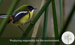 Viña 7 colores certificado de sustentabilidad