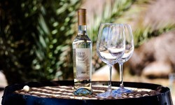 Lanzan Ruta Enoturismo del Vino del Desierto en Tarapacá