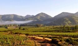 Viñas Valle del Maipo
