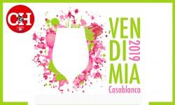 Nota video Vendimia Casablanca 2019